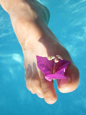 Pied ciel bleu fleur orchidée
